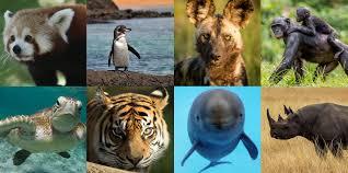 """Konkurs plastyczny """"Zwierzęta zagrożone"""""""